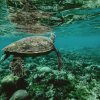 Swimming with turtles + Concert