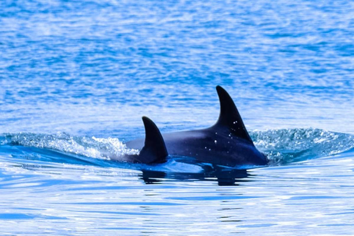 Dolphins + Fish market + BBQ