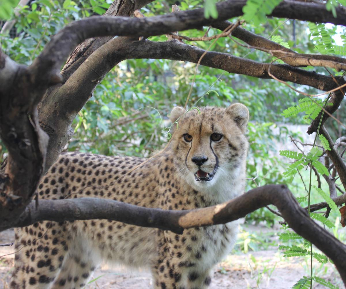 Cheetah's Rock Wildlife Rescue Center