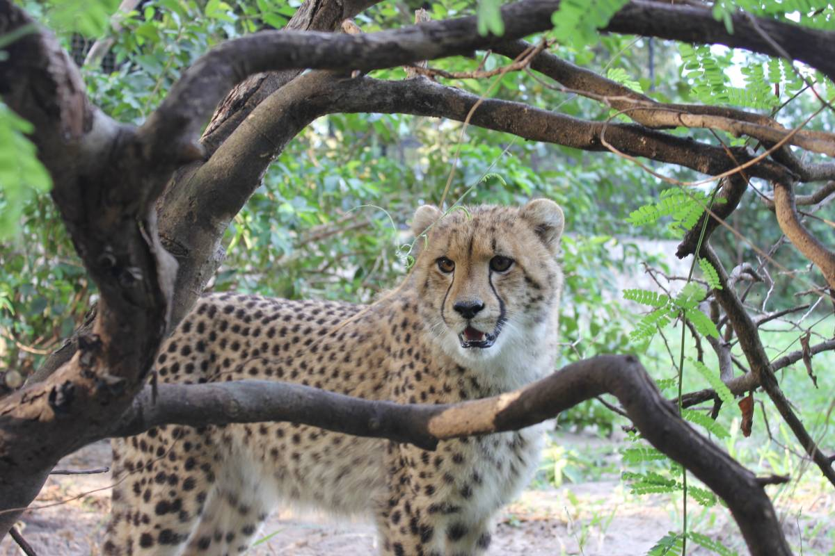 Cheetah's Rock Wildlife Rescue Center